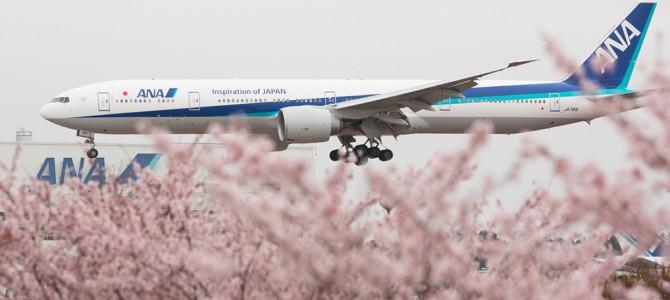 [trip]2015桜のNRT